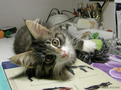 Jacky the cat p8203720cc