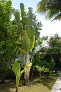 Ayara Villas Garden