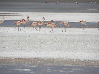 Laguna Hedionda