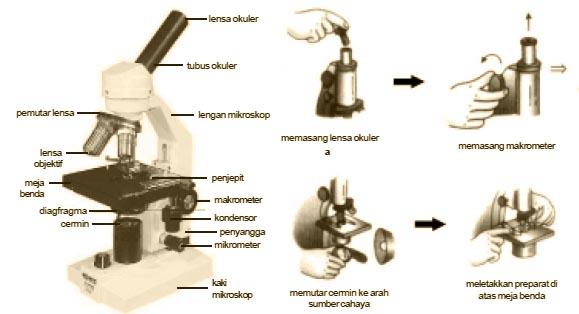 Bagian Bagian Mikroskop dan Fungsinya