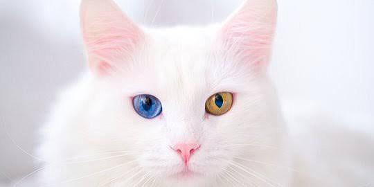 Makna Mimpi Melihat Kucing Dan Burung