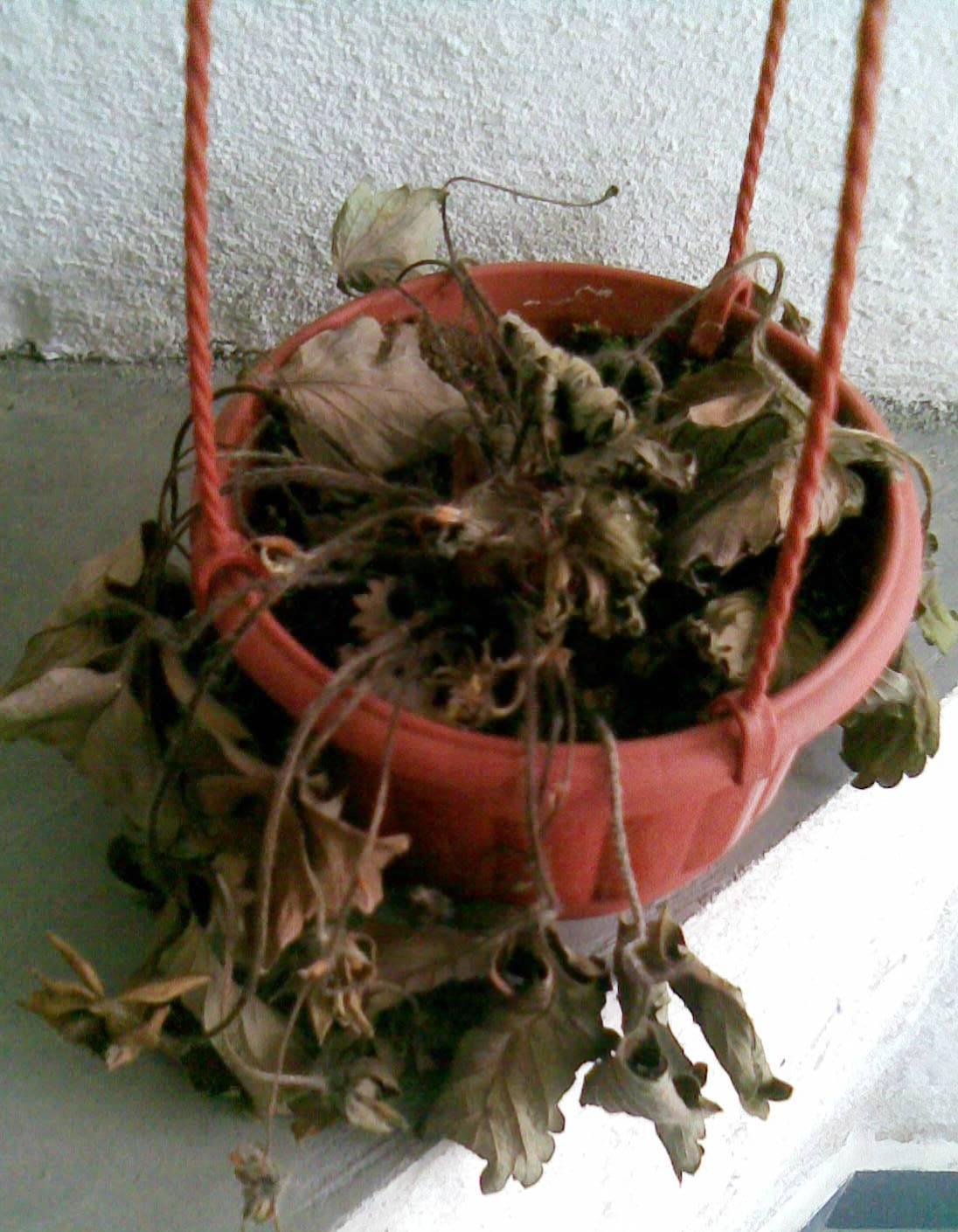 dead-strawy