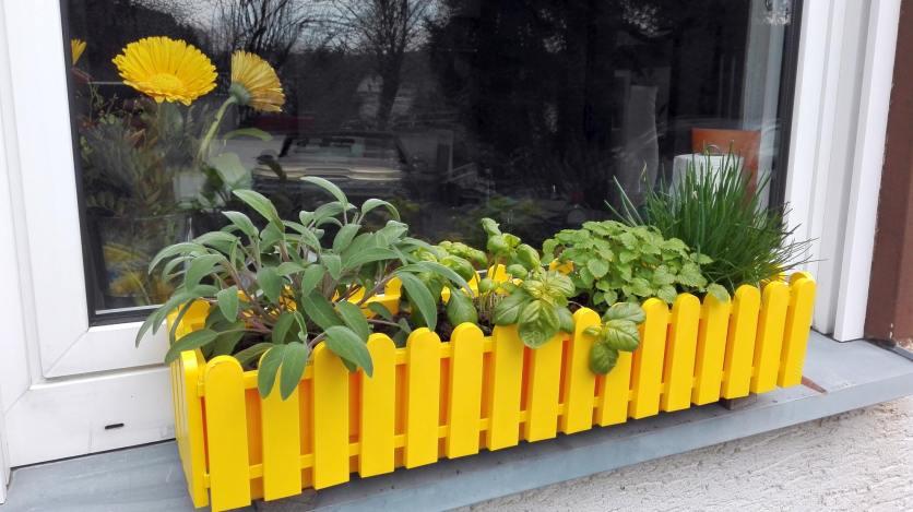"""Unser eigener """"Kräutergarten"""" - für Augen, Nase und Mund alles dabei"""