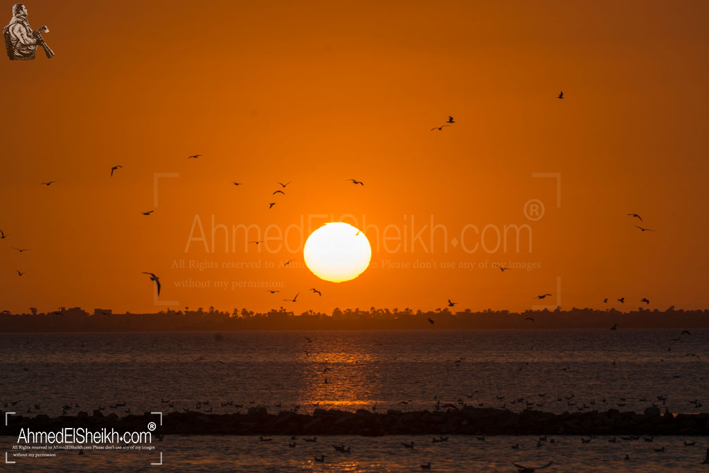 El Lesan Sunset lots of Birds There