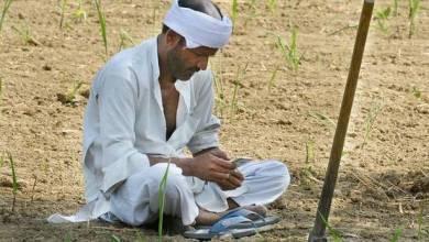 Photo of खतांचा प्रचंड तुटवडा निर्माण झाल्याने शेतकरी हवालदिल