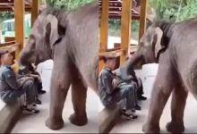 Photo of दोन तरुण खात होते केळी अन अचानक आला हत्ती,  झाले 'असे' काही.. पाहा VIDEO