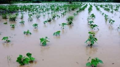 Photo of दिलासा : या तालुक्यातील नुकसानीचे तीन दिवसांत पंचनामे होणार