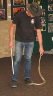 RUDY FROM ADELAIDE SNAKE CATCHERS