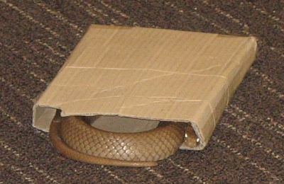 SNAKES LOVE TIGHT SPOTS_opt