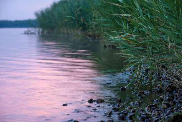 Am Ufer des Cospudener Sees