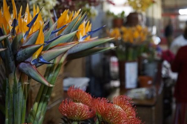 Blumen in der Markthalle von Funchal