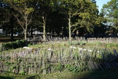 Urban Gardening - Batterey Park