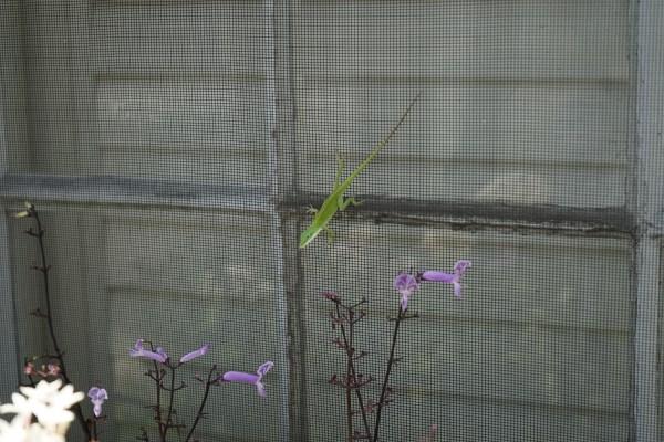kleines grünes Gecko in Charleston