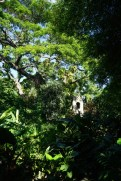 St. Kitts -Caribelle Batik - botanischer Garten