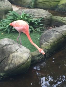Hafen Oase - Flamingo an der Wasserstelle