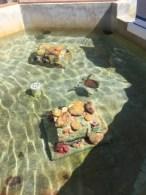 Schildkrötenfarm - Aufzugsstation