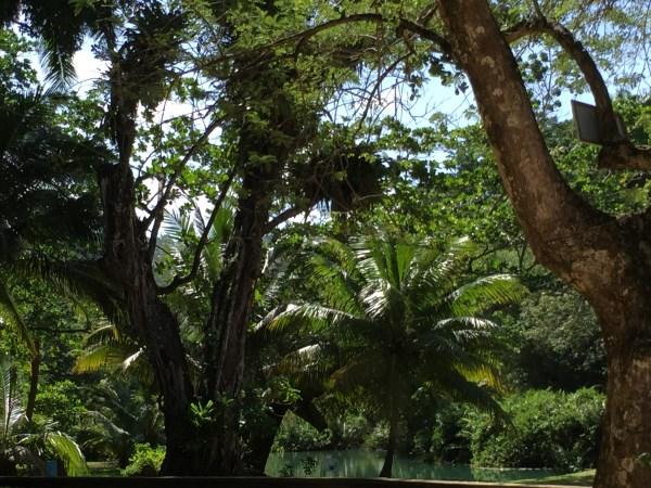 Frenchman's Cove - im Garten