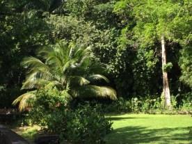 Frenchman's Cove - Palmen