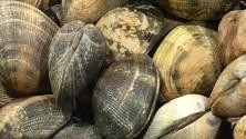 Markt Ausflug - am Fischstand - Muscheln
