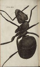 Micrographia2