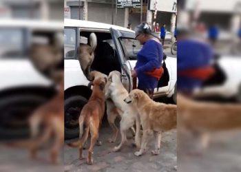 Dionisia Quispe y sus perros subiendo en un taxi.