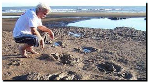 CIENCIA: Hallan huellas de un animal prehistórico