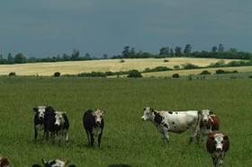 AGRO: Aprueban un sistema fiscal que permitirá la identificación de todo el ganado del país
