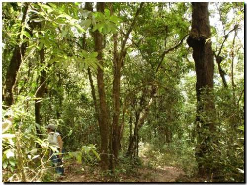 SOCIEDAD: Sancionaron la ley de bosques nativos de la Provincia