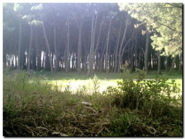 NECOCHEA: Se creó la COPAP, Comisión de Análisis y Planificación de Acciones sobre el Parque Miguel Lillo
