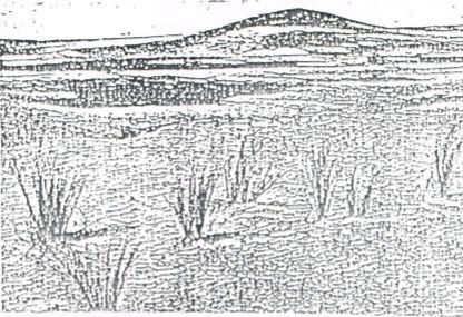 NECOCHEA: No al loteo del Parque Miguel Lillo. Escrito del Profesor Ballech