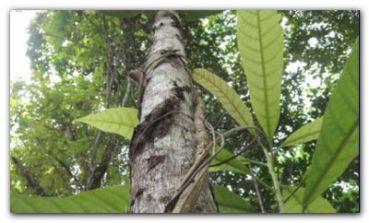 ECOLOGÍA: ¿Se deben patentar las plantas?