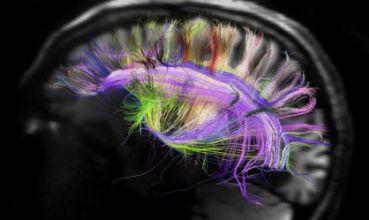 Identificado el mecanismo que graba el miedo en el cerebro