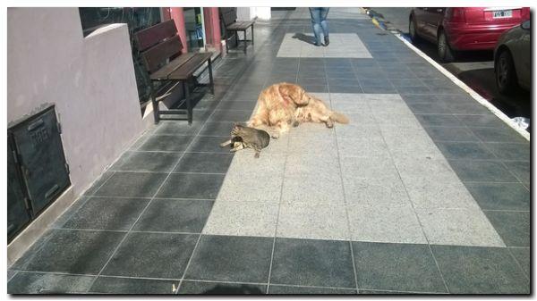 PROTECCIÓN ANIMAL: En Bahía Blanca, proponen bajarle los impuestos a quienes adopten perros callejeros