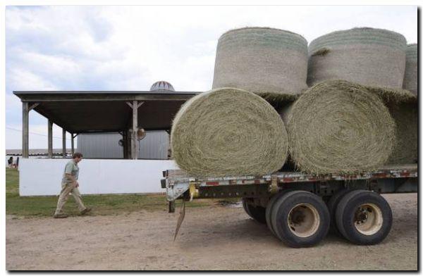 EEUU: Soja, leche, maíz, claves en renegociación de acuerdo