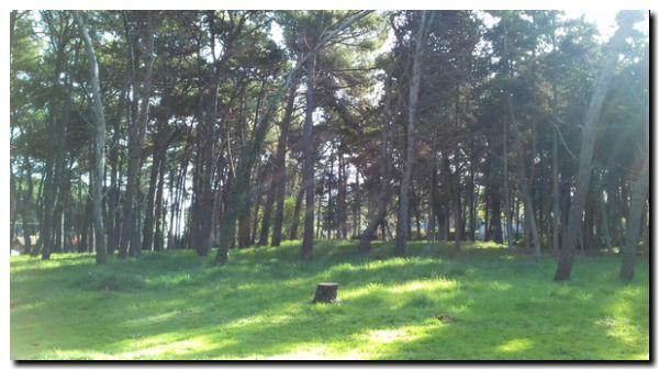 Abrazo al bosque en movimiento