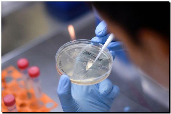 En estudio la vacuna de la tuberculosis para proteger al personal sanitario