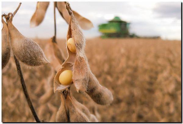 AGRO: Fuerte recorte en la producción de soja