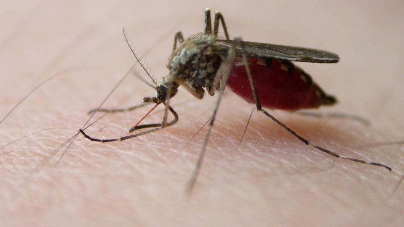 Este viernes inicia la  jornada nacional contra el dengue