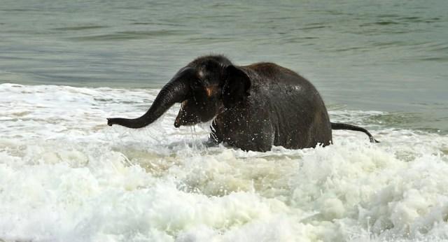Elefante en el mar.