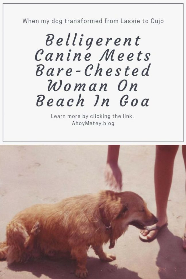 This is a funny travel story about what transpired when a belligerent canine met a bare-chested woman on Baga Beach Goa. #traveldiary #travel #story #funny #humor #humour