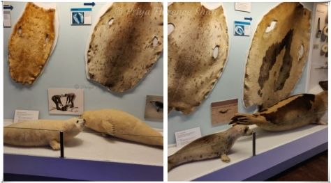 Seals, seal pelts and the clothes made from them