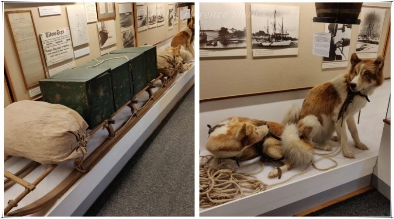 A sled and the huskies that pulled it