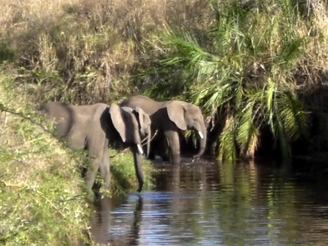 Eléphants en liberté, en Tanzanie