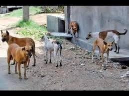 """سويلم"""" يُطالب بإعدام جميع الكلاب الضالة على مستوى مصر"""