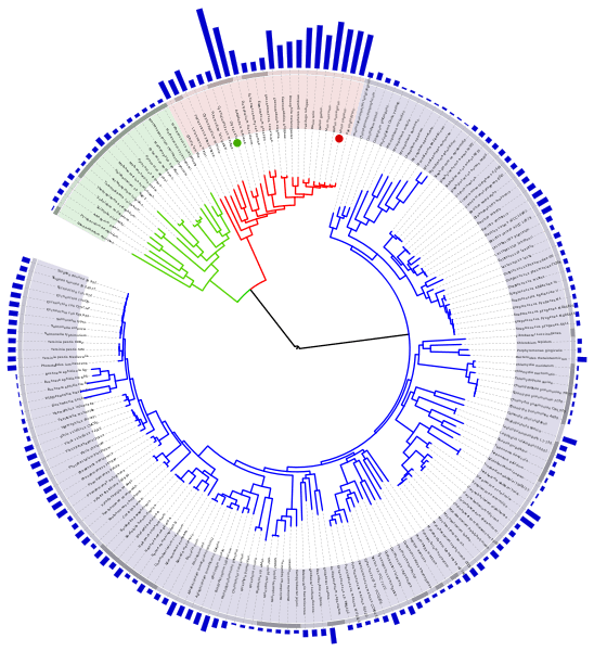 Tree_of_life_with_genome_size_svg