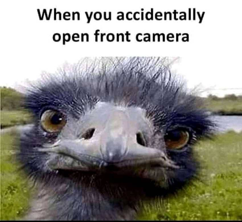 25 Best Memes About Face Camera Face Camera Memes