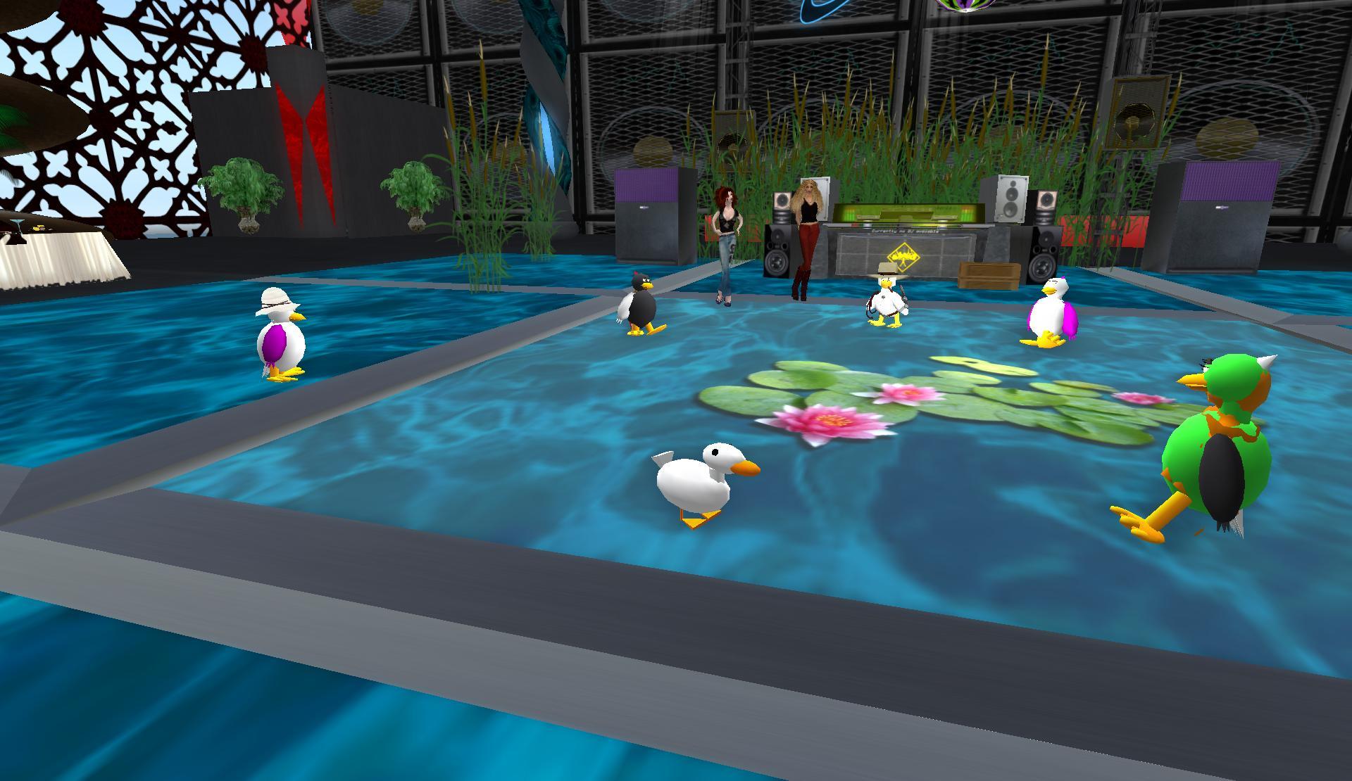 can-you-spot-the-non-av-duck
