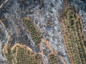 ما خلفته الحرائق في عكار - الصورة لدرب عكار
