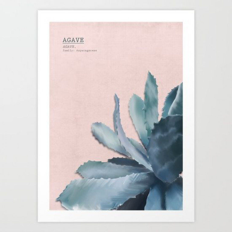 blue-agave-rose-by ahwh.ch