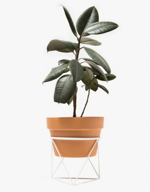 Eric Trine : Octahedron Ring Planter Short